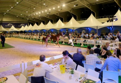 Results Foal Auction september 2016