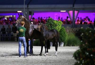 Flanders Foal & Embryo Auction: 'Offer what is not easily found on the market'