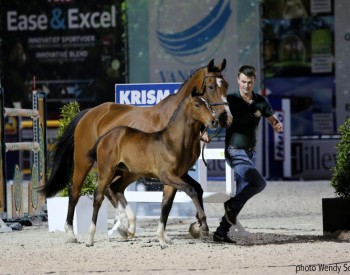 Belgians keep Flanders Foal Auction foals within own country