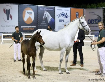 Dynamite FZ (Diamant de Semilly) sold for 25.000 euros
