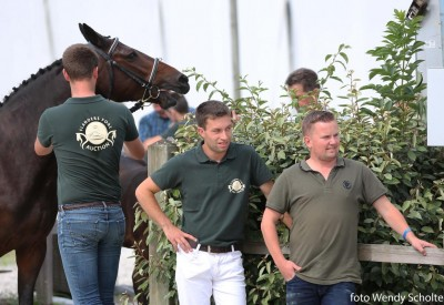 Veulenselectie Flanders Foal Auction van start