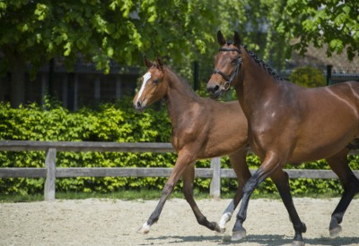 Belgische invloed in Bolesworth Elite Auction