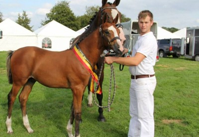 Veulenkampioen Evergem op Flanders Foal Auction